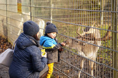 Ταΐζοντας ελάφια Στοκ εικόνα με δικαίωμα ελεύθερης χρήσης