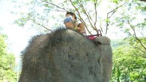Ταΐζοντας ελέφαντας Mom και κορών με την μπανάνα Το Mom και η κόρη ξοδεύουν το χρόνο στο ταξίδι φιλμ μικρού μήκους