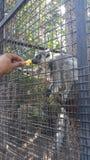 Ταΐζοντας ζώα Στοκ εικόνες με δικαίωμα ελεύθερης χρήσης
