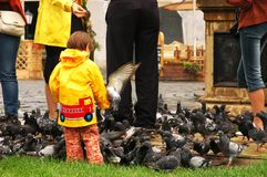 ταΐζοντας κορίτσι μικρά π&epsilon Στοκ Εικόνα