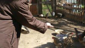 Ταΐζοντας κοτόπουλα γυναικών φιλμ μικρού μήκους