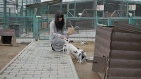 Ταΐζοντας κουνέλια γυναικών απόθεμα βίντεο