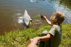 Ταΐζοντας κύκνοι αγοριών Στοκ Εικόνες