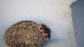 Ταΐζοντας μωρά Martin σπιτιών φιλμ μικρού μήκους