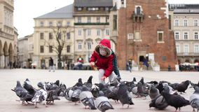 Ταΐζοντας περιστέρια κοριτσιών στο κεντρικό τετράγωνο της Κρακοβίας, Πολωνία φιλμ μικρού μήκους
