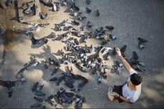 Ταΐζοντας πουλιά Στοκ Φωτογραφία
