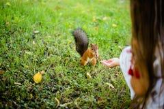 Ταΐζοντας σκίουρος μικρών κοριτσιών στο πάρκο Στοκ φωτογραφία με δικαίωμα ελεύθερης χρήσης