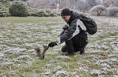 Ταΐζοντας σκίουρος Στοκ εικόνες με δικαίωμα ελεύθερης χρήσης