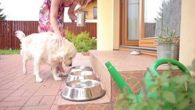 Ταΐζοντας σκυλιά φιλμ μικρού μήκους