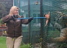 ταΐζοντας τίγρη Στοκ εικόνα με δικαίωμα ελεύθερης χρήσης