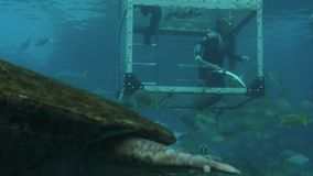 Ταΐζοντας ψάρια και καρχαρίες δυτών στο Gold Coast Αυστραλία φιλμ μικρού μήκους