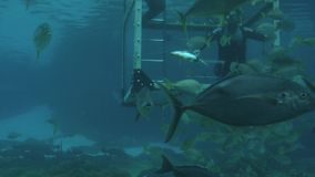 Ταΐζοντας ψάρια και καρχαρίες δυτών στο Gold Coast Αυστραλία απόθεμα βίντεο