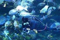 Ταΐζοντας ψάρια στη θάλασσα Στοκ Φωτογραφία