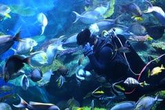 Ταΐζοντας ψάρια στη θάλασσα Στοκ εικόνα με δικαίωμα ελεύθερης χρήσης