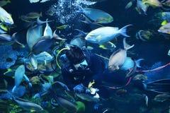 Ταΐζοντας ψάρια στη θάλασσα Στοκ φωτογραφία με δικαίωμα ελεύθερης χρήσης