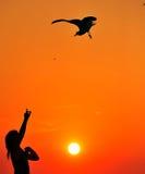 ταΐζοντας seagull στοκ εικόνες