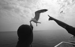 ταΐζοντας seagull Στοκ εικόνες με δικαίωμα ελεύθερης χρήσης