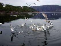 ταΐζοντας seagull Στοκ Φωτογραφίες