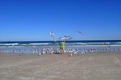 ταΐζοντας seagulls ατόμων Στοκ Εικόνα