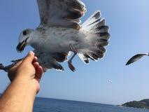 Ταΐζοντας seagulls Στοκ εικόνα με δικαίωμα ελεύθερης χρήσης