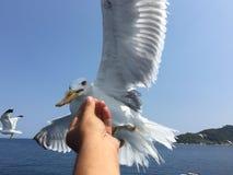 Ταΐζοντας seagulls Στοκ Φωτογραφίες