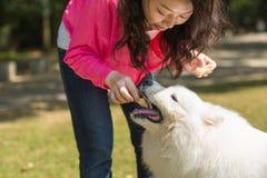 Ταΐστε ένα σκυλί Στοκ Φωτογραφία