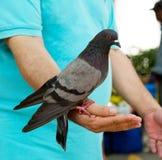 Ταΐστε τα πουλιά Στοκ εικόνες με δικαίωμα ελεύθερης χρήσης