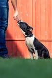 Ταΐστε το σκυλί Στοκ Εικόνες