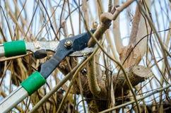 Τακτοποίηση ενός δέντρου Στοκ εικόνα με δικαίωμα ελεύθερης χρήσης