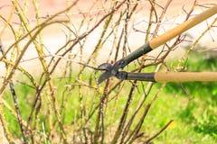 Τακτοποίηση των δέντρων στοκ φωτογραφία με δικαίωμα ελεύθερης χρήσης