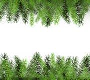 Τακτοποιημένοι πράσινοι κλάδοι δέντρων του FIR - απεικόνιση κλάδων του FIR με το διάστημα αντιγράφων για το σχέδιο Στοκ Εικόνα
