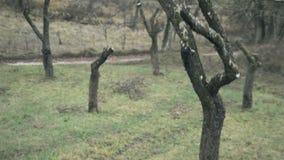 Τακτοποιημένος από τα δέντρα μηλιάς στο χωριό της Λιθουανίας απόθεμα βίντεο