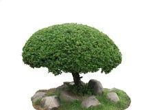 Τακτοποιημένος θάμνος του δέντρου για τη διακόσμηση στον κήπο στοκ φωτογραφία