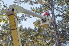 Τακτοποιώντας δέντρα Στοκ φωτογραφία με δικαίωμα ελεύθερης χρήσης