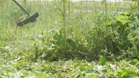 Τακτοποιώντας χλόη ατόμων σε έναν κήπο που χρησιμοποιεί έναν χορτοκόπτη φιλμ μικρού μήκους