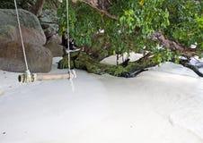 Ταλάντευση σχοινιών από το δέντρο θαλασσίως Στοκ Εικόνα