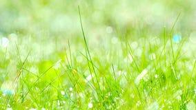 Ταλάντευση Wildflowers στον αέρα νωρίς το πρωί απόθεμα βίντεο