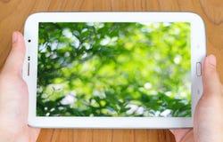 Ταμπλέτα με το δέντρο θαμπάδων με το ελαφρύ υπόβαθρο bokeh στην οθόνη Στοκ Φωτογραφία