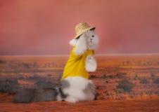Ταξίδια γατών μέσω της ερήμου στοκ εικόνες με δικαίωμα ελεύθερης χρήσης