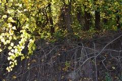 Ταξίδια φθινοπώρου στις όχθεις του ποταμού 1 Δούναβη στοκ φωτογραφίες