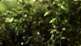 Ταξίδι κάτω από τις εγκαταστάσεις στα πράσινα αλσύλλια Πράσινοι θάμνοι στη δασική κινηματογράφηση σε πρώτο πλάνο απόθεμα βίντεο