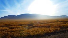 Ταξίδι μέσω tundra το φθινόπωρο στην αυγή Στοκ Φωτογραφίες
