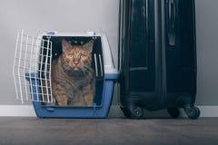 Ταξίδι με μια γάτα - γάτα πιπεροριζών σε έναν μεταφορέα κατοικίδιων ζώων δίπλα σε μια βαλίτσα Στοκ εικόνες με δικαίωμα ελεύθερης χρήσης