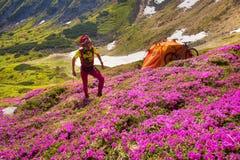 Ταξίδι με το λουλούδι carpathians στοκ φωτογραφία με δικαίωμα ελεύθερης χρήσης