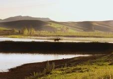Ταξίδι σε όλο τον κόσμο στα διαφορετικά μέρη της όμορφης άγριας φύσης Στοκ Εικόνα