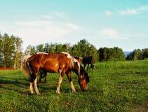 Ταξίδι σε όλο τον κόσμο στα διαφορετικά μέρη της όμορφης άγριας φύσης Στοκ Εικόνες