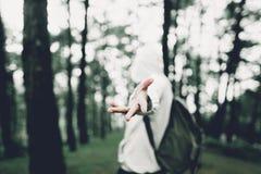 Ταξίδι στο σκοτεινό και κρύο δέντρο ζουγκλών στοκ εικόνα με δικαίωμα ελεύθερης χρήσης