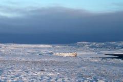 Ταξίδι της Ισλανδίας Στοκ φωτογραφία με δικαίωμα ελεύθερης χρήσης