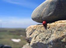 Ταξίδι ladybug 1 Στοκ Εικόνες