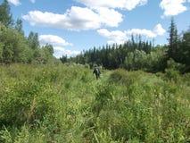 Ταξίδι μέσω του δάσους Στοκ φωτογραφίες με δικαίωμα ελεύθερης χρήσης